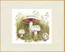 "Field mushrooms print from watercolour painting size 14"" x 11"""