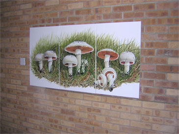 Field Mushrooms, acrylic on canvas by Peter Thwaites