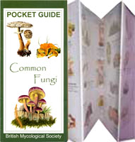 "British Mycological Society ""Pocket Guide to Common Fungi"", illustrated by Peter Thwaites"