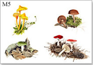 Wild mushroom greeting card, mushroom greeting card from watercolour painting by Peter Thwaites