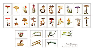 Mushroom postcards from watercolour paintings by Peter Thwaites