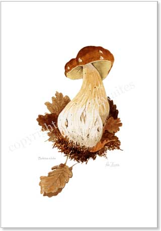 Cep, boletus edulis, wild mushroom poster print from watercolour painting by Peter Thwaites