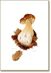 Cep, poster print from watercolour by Peter Thwaites