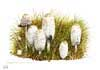 Young shaggy inkcaps, print from watercolor painting by Peter Thwaites