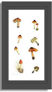 Blackening waxcaps, tall mushroom print from watercolour painting by Peter Thwaites