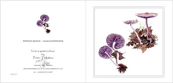 Amethyst Deceiver, mushroom greeting card from watercolour painting by Peter Thwaites