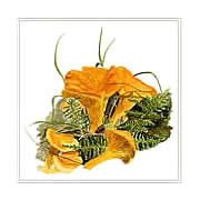 Chanterelles, mushroom greeting card printed from watercolour painting by Peter Thwaites