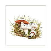 Field mushrooms,  greeting card printed from watercolour painting by Peter Thwaites