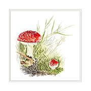 Fly Agaric, mushroom greeting card printed from watercolour painting by Peter Thwaites