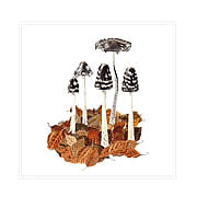 Magpie inkcaps, mushroom greeting card printed from watercolour painting by Peter Thwaites