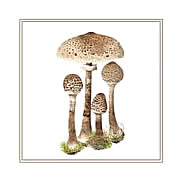 Parasols, mushroom greeting card printed from watercolour painting by PeterThwaites