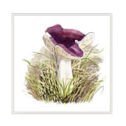 Purple brittlegill, mushroom greeting card printed from watercolour painting by Peter Thwaites